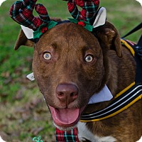 Adopt A Pet :: Brewster - Greenwood, SC