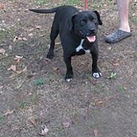 Adopt A Pet :: Brady - Lawrenceville, GA