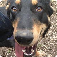 Adopt A Pet :: Mel - Trenton, NJ