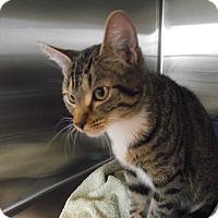 Adopt A Pet :: Jude - Chambersburg, PA