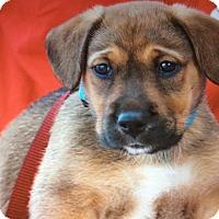 Adopt A Pet :: MIA VON META - Los Angeles, CA