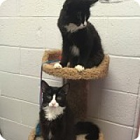 Adopt A Pet :: Durand - Manchester, CT