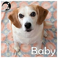 Adopt A Pet :: Baby - Pittsburgh, PA