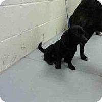 Adopt A Pet :: CALVIN - Conroe, TX