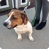 Basset Hound Mix Dog for adoption in Glenwood, Georgia - Mindy