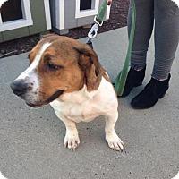 Adopt A Pet :: Mindy - Glenwood, GA