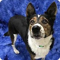 Adopt A Pet :: Casper - Portland, OR