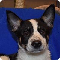 Adopt A Pet :: Jack - Pembroke, GA