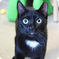 Adopt A Pet :: Huntress - Sarasota, FL