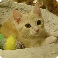 Adopt A Pet :: Chip - Morganton, NC