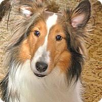Adopt A Pet :: Prinz Charming! - Circle Pines, MN
