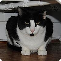 Adopt A Pet :: Scrappy - N. Berwick, ME