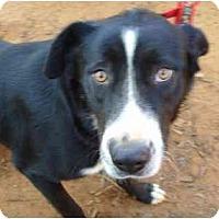 Adopt A Pet :: Dominique - Whitehouse, TX