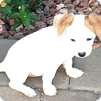 Adopt A Pet :: Night Fury - dragon litter - Phoenix, AZ