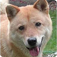 Adopt A Pet :: Rula - Southern California, CA