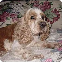 Adopt A Pet :: Ajax - Sugarland, TX