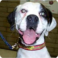 Adopt A Pet :: Esmeralda - Scottsdale, AZ