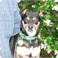 Adopt A Pet :: Max - Kingwood, TX