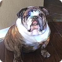 Adopt A Pet :: Cole - Cibolo, TX
