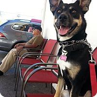 Adopt A Pet :: RAMONA - Malibu, CA