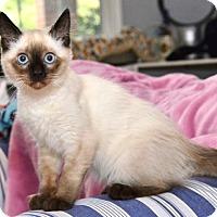 Adopt A Pet :: Tessie - Davis, CA
