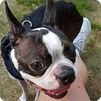Adopt A Pet :: Sherlock - in Maine - kennebunkport, ME