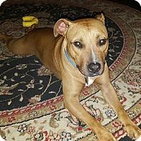 Adopt A Pet :: Duke - New Orleans, LA