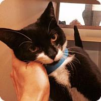 Adopt A Pet :: Geralt - Herndon, VA