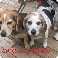 Adopt A Pet :: CARMEN & CARL - Ventnor City, NJ