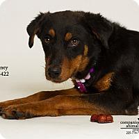 Adopt A Pet :: Sydney - Baton Rouge, LA