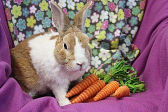 Dutch for adoption in Erie, Pennsylvania - Joe