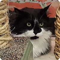 Adopt A Pet :: Bugs - Elyria, OH