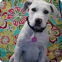 Adopt A Pet :: MUTT - Gustine, CA