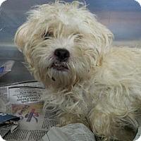 Adopt A Pet :: Dallas - Miami, FL