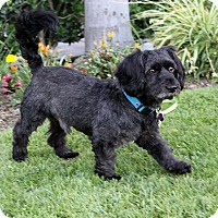 Adopt A Pet :: JETT - Newport Beach, CA