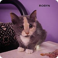 Adopt A Pet :: Robyn - Speedway, IN