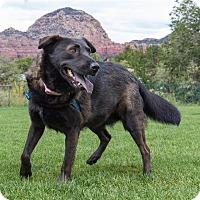 Shepherd (Unknown Type)/Chow Chow Mix Dog for adoption in Sedona, Arizona - Lila