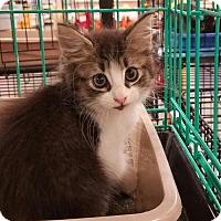 Adopt A Pet :: Bonnie - Boynton Beach, FL