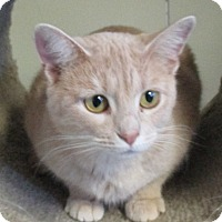 Adopt A Pet :: Mary Kate - Reeds Spring, MO