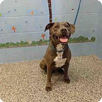 Adopt A Pet :: A500253 - San Bernardino, CA