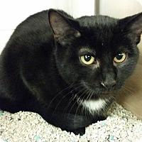 Adopt A Pet :: TJ - Middlebury, CT