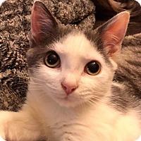 Adopt A Pet :: Mira - Toms River, NJ