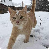 Adopt A Pet :: DOBIE KRUEL - Canfield, OH