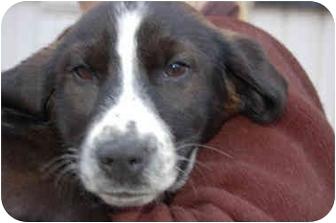 Callie | Adopted Puppy | Bradford | White Plains, NY ...