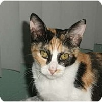 Adopt A Pet :: Cali - Redondo Beach, CA