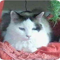 Adopt A Pet :: Tippy in Bend, OR - Keizer, OR