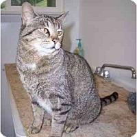Adopt A Pet :: Beth - Delmont, PA