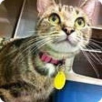 Adopt A Pet :: Siesta - Pittstown, NJ