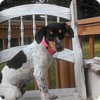 Adopt A Pet :: Delainie - Austin, AR