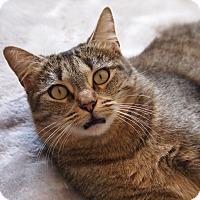 Adopt A Pet :: Fluffy - Coronado, CA